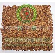 供应出口级大麦茶 天然大麦茶 原味大麦茶 烘焙型大麦茶