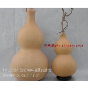 供应天然小白皮葫芦/天然大葫芦批发/小葫芦挂件