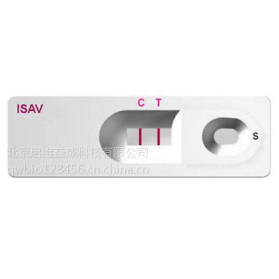 传染性鲑鱼贫血病毒(ISAV)快速检测试纸条