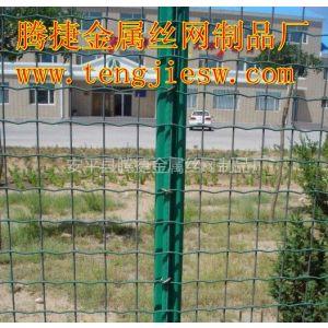 供应临汾市公路围网|养殖围网|围网价格|山鸡围网-腾捷金属丝网制品厂