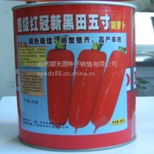 供应胡萝卜高产种植技术