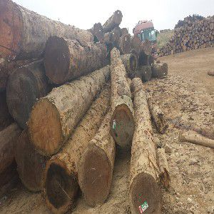 木方木材方料,划算的木方哪里有卖