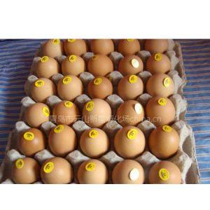 """供应种鸡、商品鸡、""""壳里香"""""""