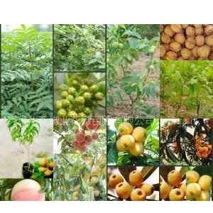 供应贵州果树苗