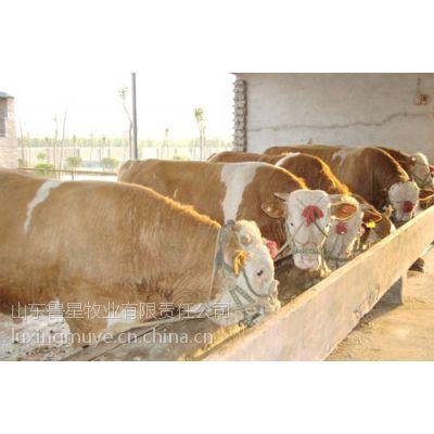 供应肉牛养殖利润分析