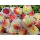 供应大棚油桃,陕西大棚油桃价格,大棚油桃产地