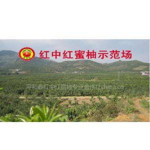 供应红肉蜜柚和红皮红肉蜜柚有什么不同www.phhmy.com