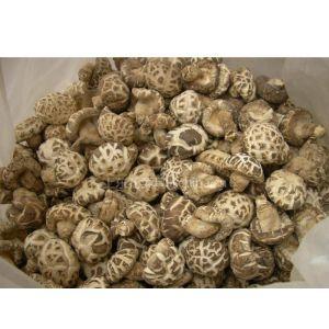 大量供应上成花色香菇135或9015号水菇干菇上东花菜种植基地食用菌