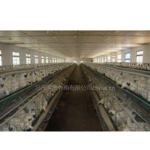 供应广东的原生态竹丝鸡养殖场