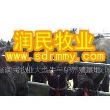 供应肉驴养殖、养驴的效益、养驴场