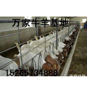 供应安徽波尔山羊什么价格?