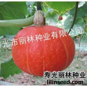 供应红南瓜种子