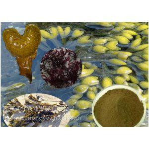 供应厂家直销高含量标准品墨角藻提取物