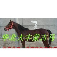 湖南马驹价格 哪里卖伊犁马 蒙古马 矮马纯血马 半血马养殖