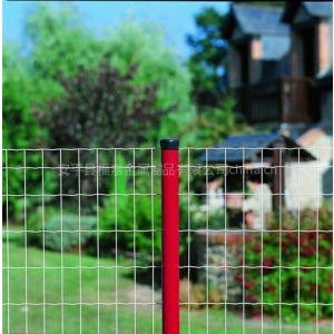 供应荷兰网、养殖场防护网|圈鸡护栏网|山林养鸡护栏网
