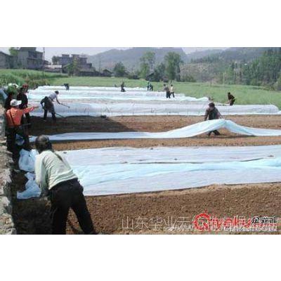 供应防寒防霜保温育苗无纺布,丙纶纺粘无纺布