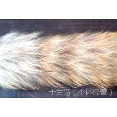 貉子毛条帽条狐狸毛条帽条皮草毛条毛毛条服装专用毛条
