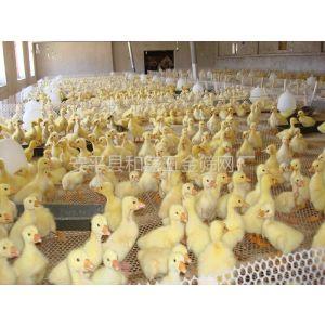 供应德州养鸡网 鸡床网 养鸭网 鸭床网 水产养殖网 塑料平网 路基网 空调网 汽车坐垫