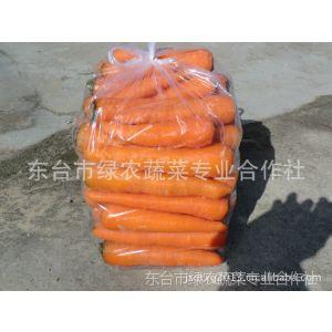 供应胡萝卜商品级胡萝卜出口级胡萝卜-东台市绿农蔬菜专业合作社
