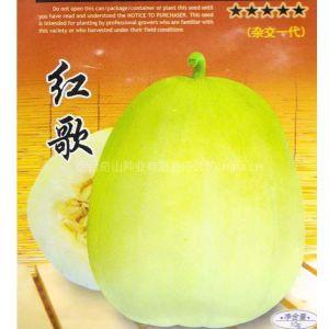 供应早熟高产抗病红歌F1甜瓜种子