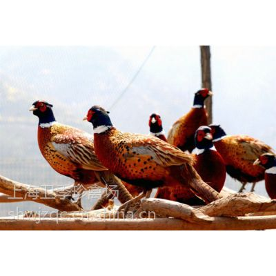 常年提供各类珍禽种苗,全国发货