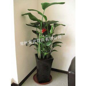 常州花木出租/室内绿植盆栽租赁低廉公司