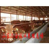 供应利木赞牛 利木赞牛价格 肉牛 小公牛 利木赞牛养殖场