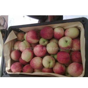 供应陕西油桃价格,油桃基地,油桃产地批发,油桃厂家