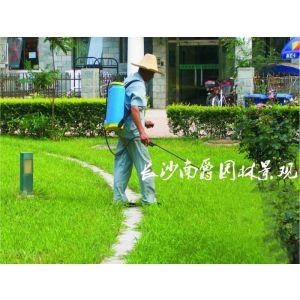 供应绿化养护