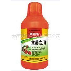 供应神奇806草莓专用 生物制剂克服草莓土传病害 www.sq806.cn