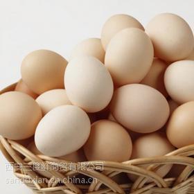 三度鲜画乡农保洁蛋【15枚/盒】