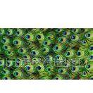 供应供应光照4级数码印花雪尼尔沙发布,装饰用纺织品 照片印花