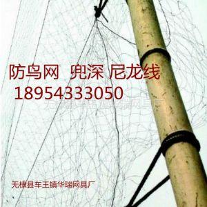供应防鸟网