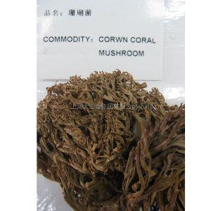 供应珊瑚菌珊瑚菌批发食用菌食用菌批发