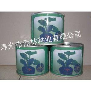 供应黄瓜砧木种子黄瓜嫁接砧木