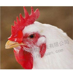 供应新型鸡眼镜 批发 量大优惠
