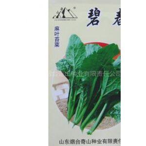 供应碧春麻叶苔菜种子