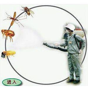 广州南沙区杀虫公司南沙区专业杀老鼠公司