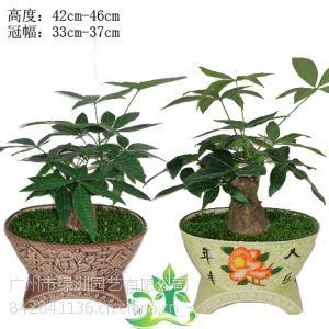 供应广州绿洲园艺 迷你小盆栽小森林批发 办公室家居精品观叶绿植