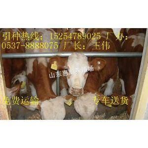供应四川肉牛养殖场在哪