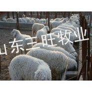 供应养什么羊效益高 养什么羊挣钱快 山东三旺牧业牛羊养殖场