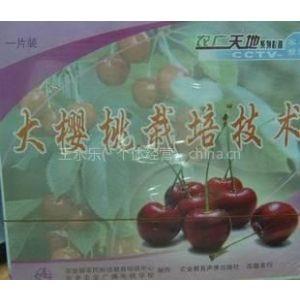 供应樱桃如何种植,大樱桃树种植技术,大棚樱桃种植技术视频资料大全