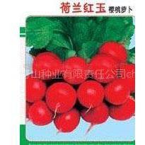 供应荷兰红玉樱桃萝卜种子