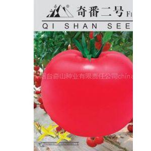 供应高抗TY病毒粉果大番茄种子--奇番二号F1种子