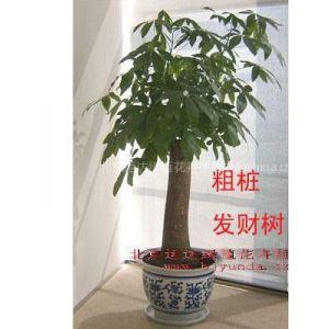 供应北京植物租赁室内花卉租赁