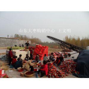 供应山东金丝枣收购厂家