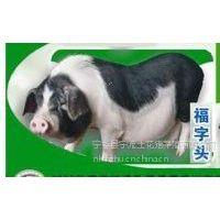 湖南优质土花猪肉做法大全价格合理欢迎选购