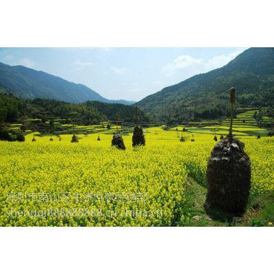四川菜子油植物食用油 农家自栽自榨天然植物一级菜籽油