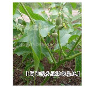 供应四川海天核桃苗圃提供:核桃苗种植技术
