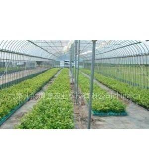 供应有机蔬菜--安全认证产品